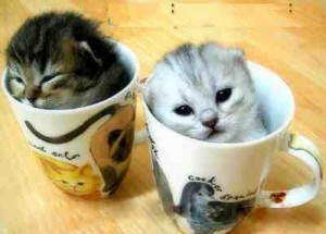 cat-coffe